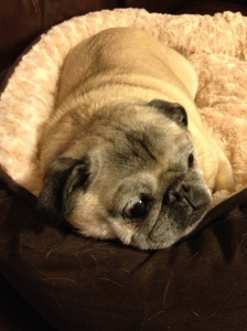 And Earl (aka Old Man Earl) the Pug - the Dog Patriarch of the family!