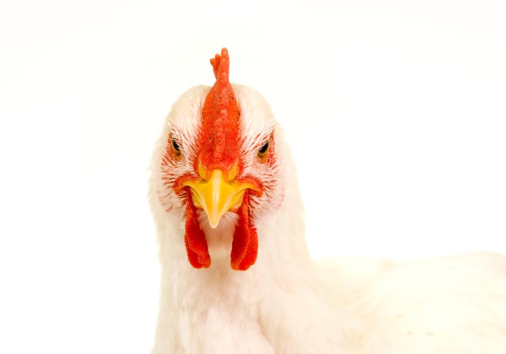 Egg Industry Environmental Footprint Study   via MyOtherExcitingSelf.wordpress.com
