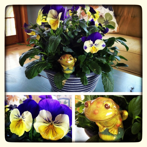 Pansies for Spring   via MyOtherMoreExcitingSelf.wordpress.com
