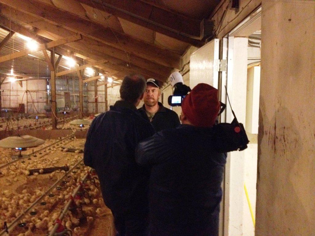 WCCO Interview with Minnesota Turkey farmer Scott Heymer | via MyOtherMoreExcitingSelf.wordpress.com