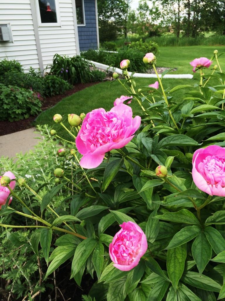 Garden Walk-About in June | via MyOtherMoreExcitingSelf.wordpress.com