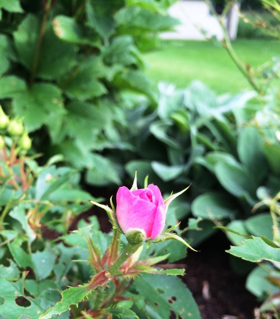 The Glory of Gardening | via MyOtherMoreExcitingSelf.wordpress.com #gardening #gardenchat