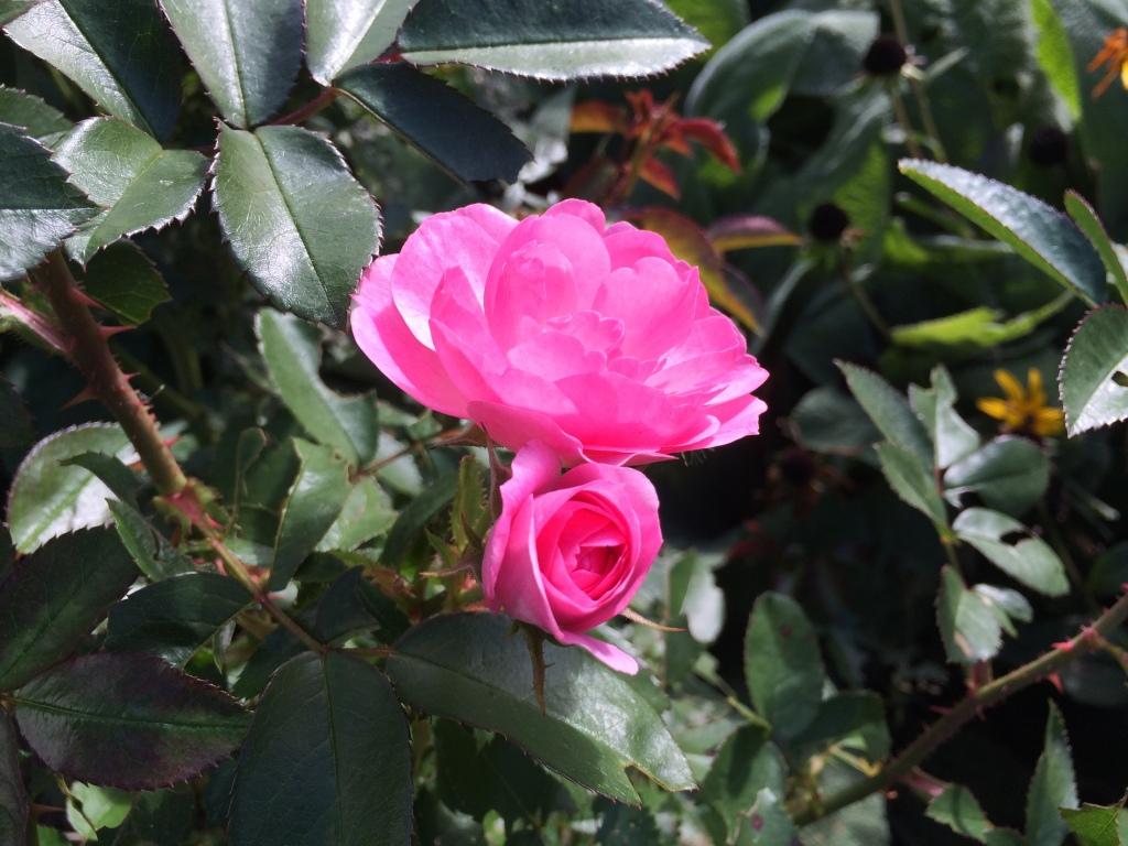Garden Walk-About   October Edition   via MyOtherMoreExcitingSelf.wordpress.com #gardenchat #gardening